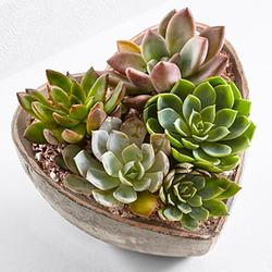 A dish of succulents could be the perfect thing for the girl who has everything, especially if she's a plant killer. Suit the container to her style.