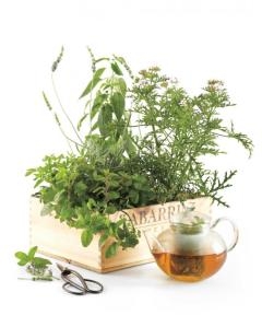 Herbs for cooking (fresh and potted), or in spice mixes (maybe better for a  cottage). Also, try some yummy blends of tea in pretty tins.